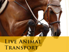 liveanimal transport vertical banner